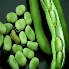 الفول الأخضر المجمدة والفريش